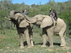 Elephant safaris